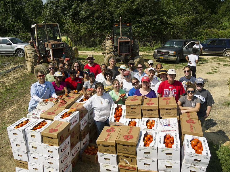 USDA Rural Development gave a boost to the 2017 Feds Feed Families by leading a gleaning expedition to Miller's Farms in Clinton, Maryland August 25. Thirty USDA employees gathered tomatoes under the leadership of Assistant to the Secretary Anne Hazlett. USDA photo by Steve Thompson.